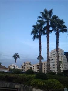 alt=<palm trees>